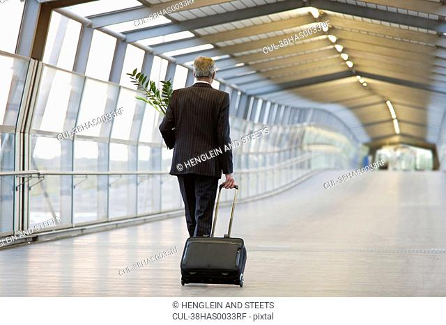Businessman wheeling luggage with plant