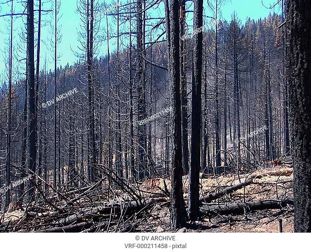A fire burned forest with trees cut down