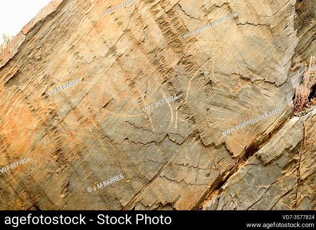 Siega Verde, paleolithic site, World Heritage. Engravings of animals on shale. Villar de la Yegua, Salamanca province, Castilla y Leon, Spain