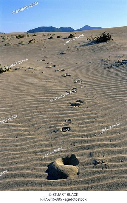 Footprints through sand dunes, near Corralejo, Fuerteventura, Canary Islands, Spain, Europe