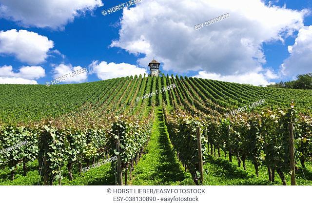 Tower at Lerchenberg in the vineyards near Meersburg - Meersburg, Lake Constance, Baden-Wuerttemberg, Germany, Europe