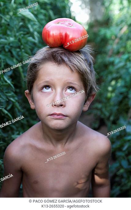 Boy picking vegetables in garden