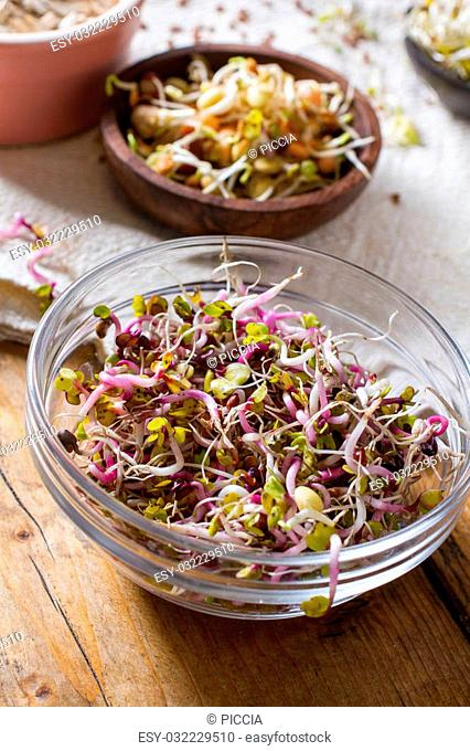 Colourful and healthy crunchy mixed seeds and various sprouts. China rose, alfalfa, bean sprouts