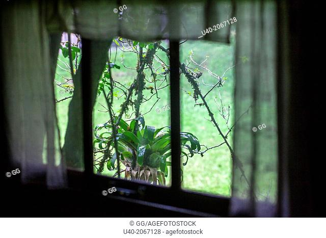 Guatemala, Alta Verapaz, bromelia through window curtain