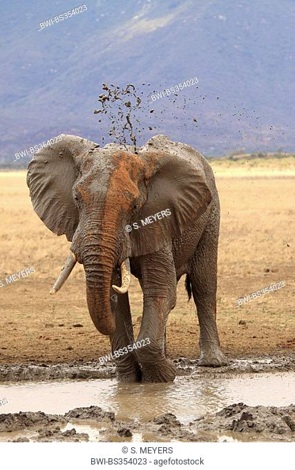 African elephant (Loxodonta africana), bull taking a mud bath at a water hole in ferrous red soil, Kenya, Tsavo East National Park