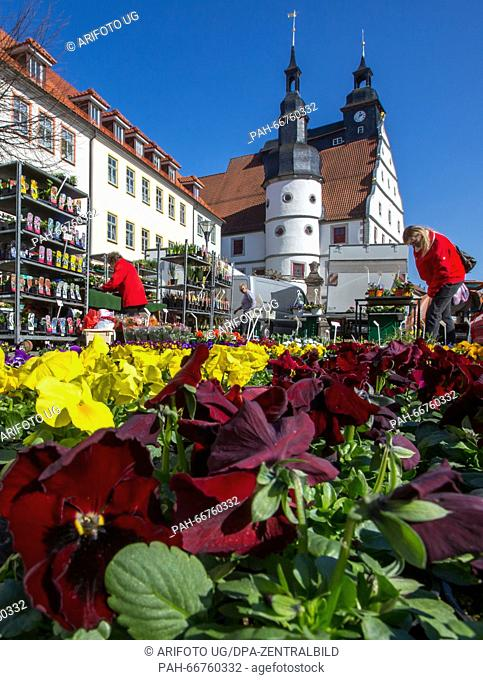 Pansies on sale at the market place in Hildburghausen, Germany, 17 March 2016. Photo: Michael Reichel/dpa | usage worldwide