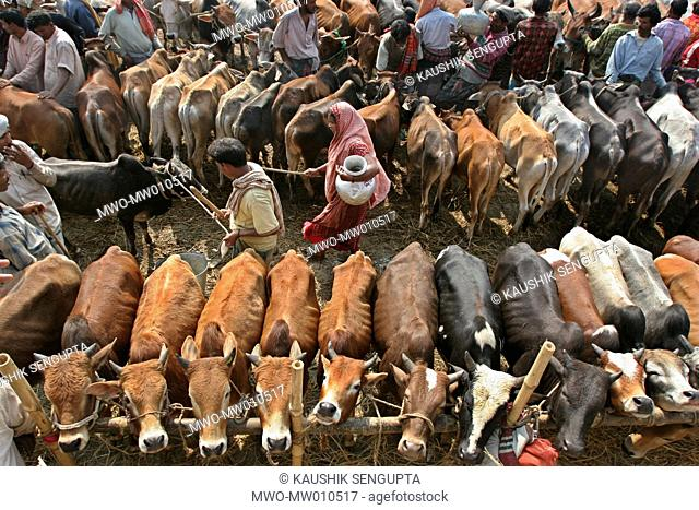 Gabtali Cattle Market, one of the largest cattle markets of the city ahead of the second biggest Muslim festival Eid-ul-Azha known as the Eid of Sacrifice This...