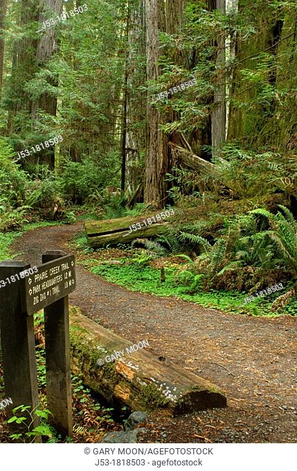 Trail sign at trail junction in old growth coast redwood forest, Prairie Creek Redwoods State Park, California