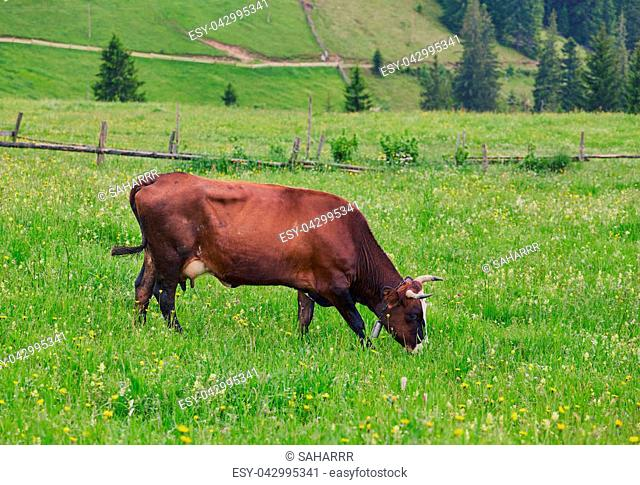 Green meadow in mountains and cows, summer landscape