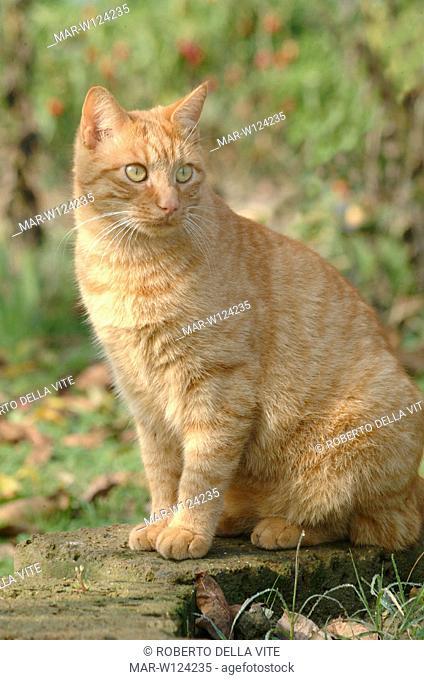 mongrel cat