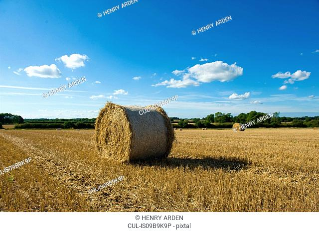 Hay bales in harvested rural field