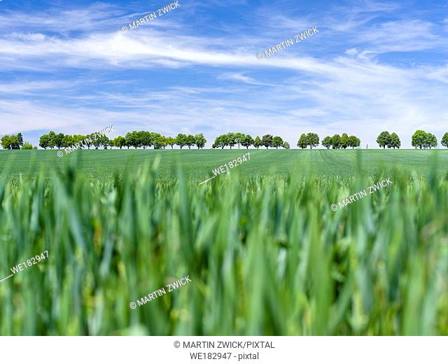 Fields in Thuringia near towns of Muehlhausen and Weberstedt. Europe, Central Europe, Germany, Thuringa