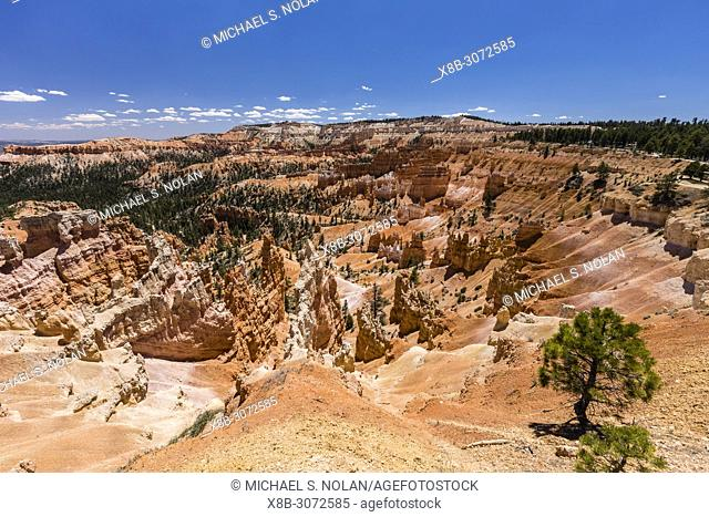 View of hoodoo formations from along the rim near Sunrise Point in Bryce Canyon National Park, Utah, USA