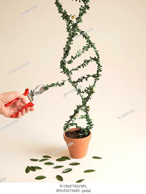 Modifying DNA (deoxyribonucleic acid), conceptual image