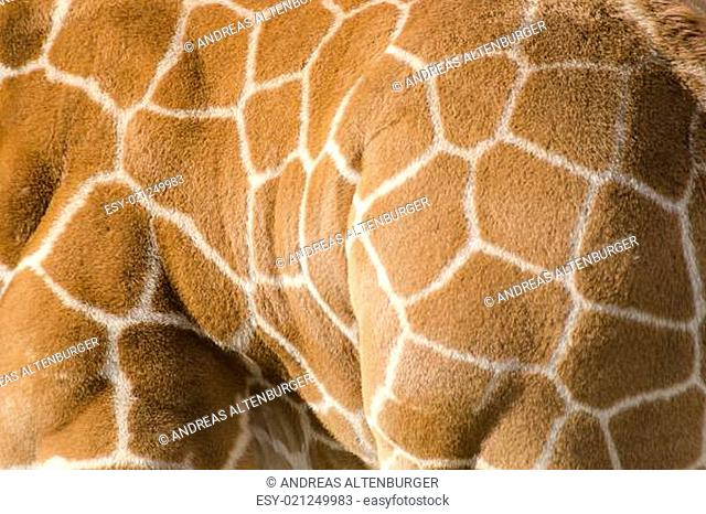 Background pattern of giraffe skin