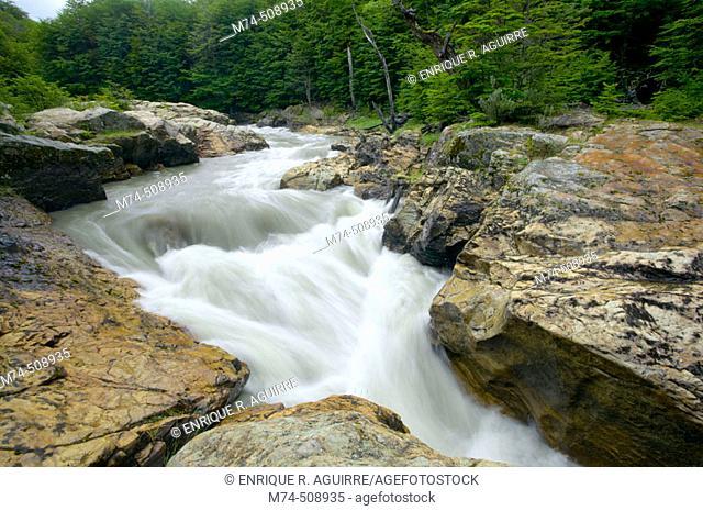 Rio Pipo and Lenga (Notohofagus pumilio) forest. Tierra de Fuego National Park Argentina