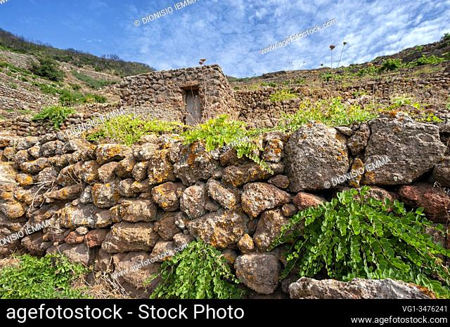 Pantelleria, Trapani district, Sicily, Italy, Europe, terraces where capers are grown, a typical product of the island