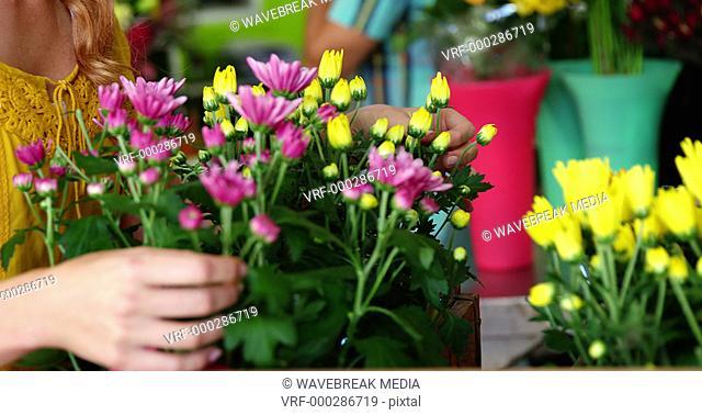 Female florist arraigning flowers