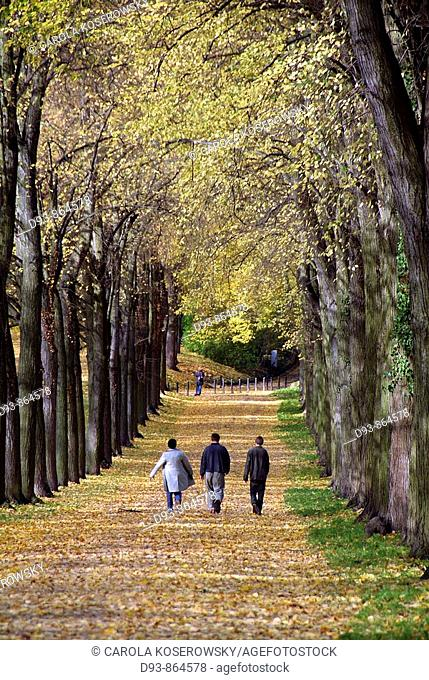 D, Germany, Brandenburg, Potsdam, Nature, Autumn, fall, forest, park, alley