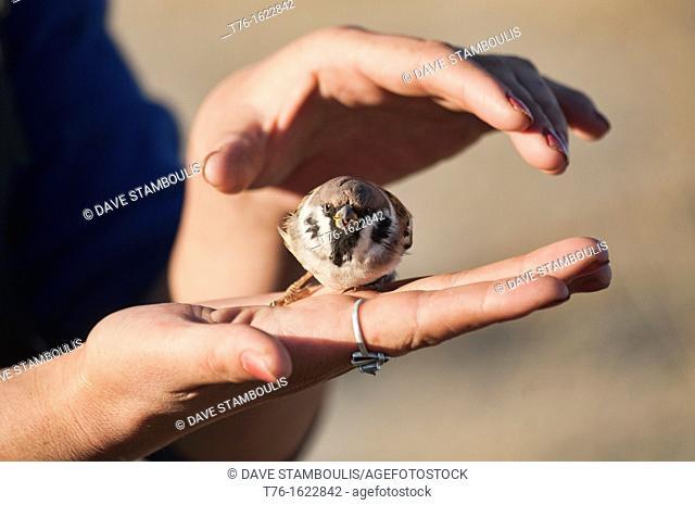 holding a small bird in Bayan-Ölgii in Western Mongolia