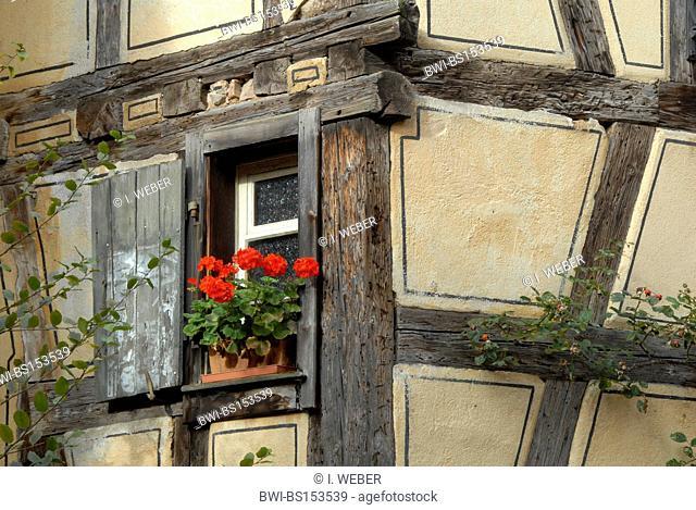 geranium (Pelargonium spec.), floral ornaments at timber framed house, France, Alsace, Riquewihr