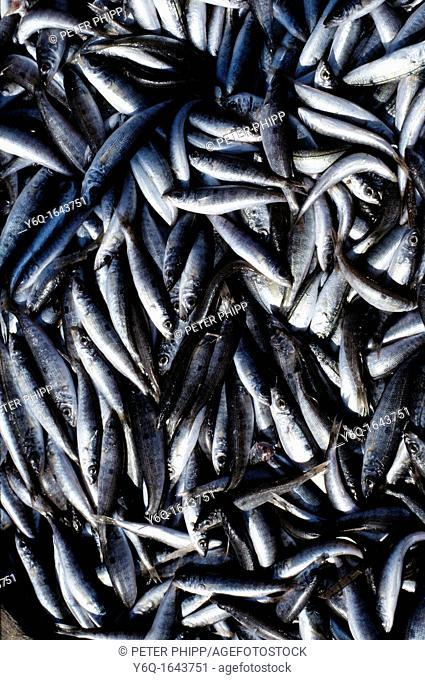 Portuguese Sardines