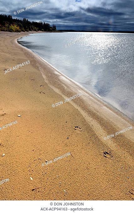 Wolf tracks in sand along shore of Ennadai Lake, Ennadai Lake, Nunavut, Canada