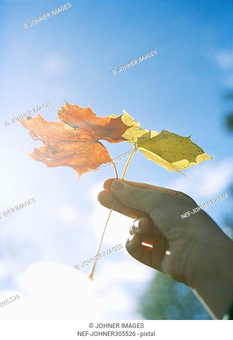 An autumn leaf in a hand