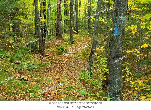North Country National Scenic Trail, Chequamegon-Nicolet National Forest, Wisconsin