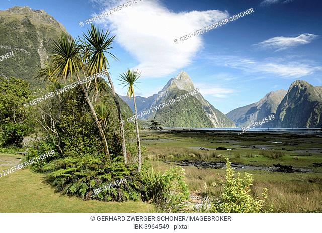 Mitre Peak, palm group and shrubs, Fiordland, Milford Sound, South Island, New Zealand