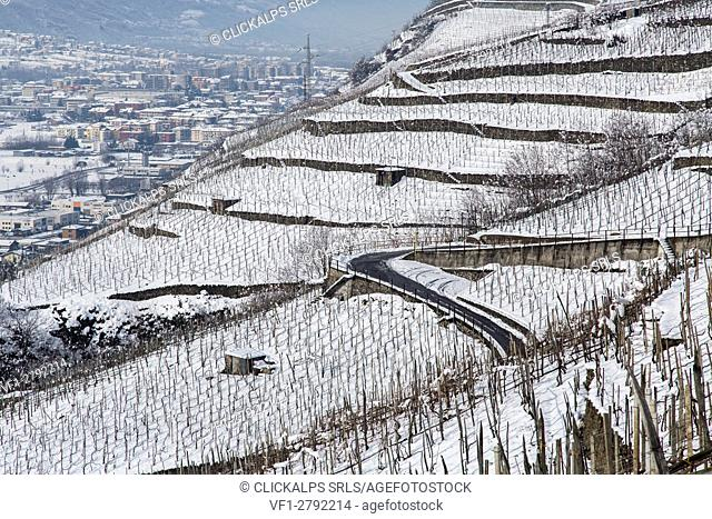 A tortuous street surrounded by the vineyards of Valtellina covered in snow. Valtellina, Lombardy, Italy Europe