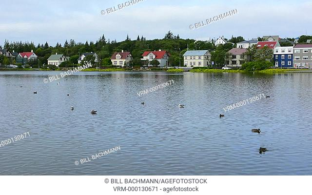 Reykjavik Iceland Arctic downtown Tjornin Lake colorful homes on lake with ducks and gulls resting in water