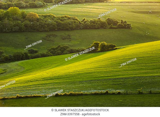 Spring evening in South Downs National Park, West Sussex, England