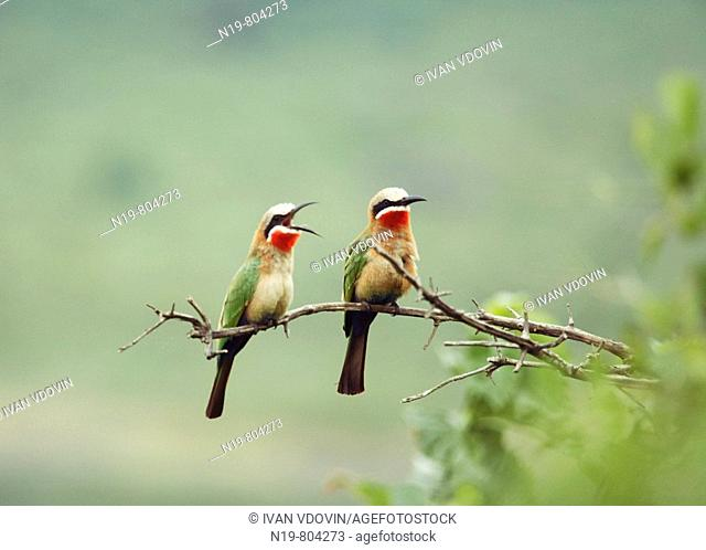 Birds, Arusha National Park, Tanzania
