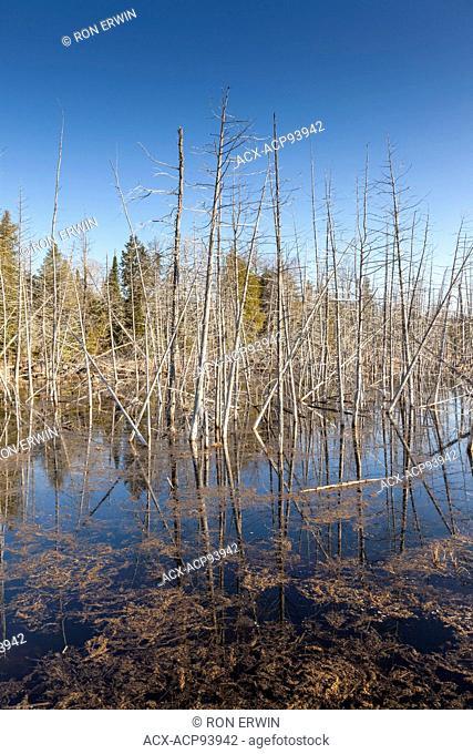 Wetlands in Spring, Manitoulin Island, Ontario