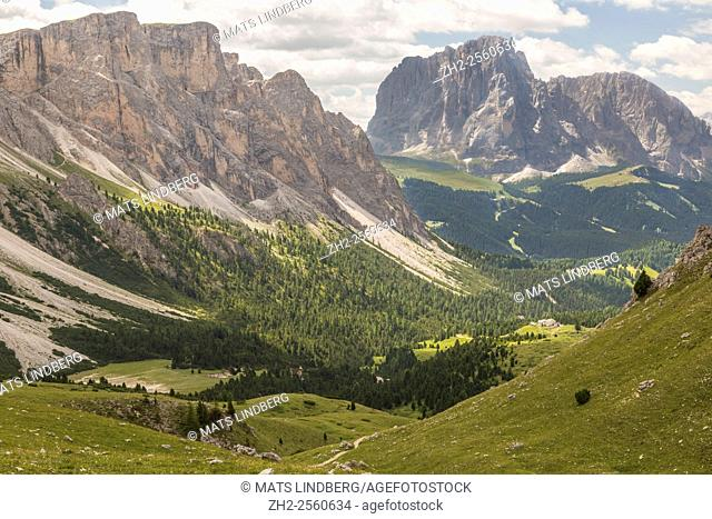 View over the Dolomites from Col Raiser, with spruce trees around, Selva, Val Gardena, Italy