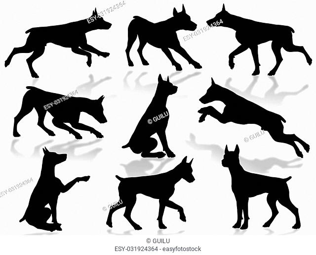 Dogs silhouette in different poses and attitudes