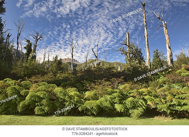 Chaitén volcano, Pumalin National Park, Patagonia, Chaitén, Chile