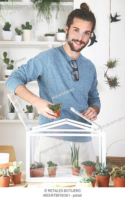 Man putting cacti and succulents in a small greenhouse