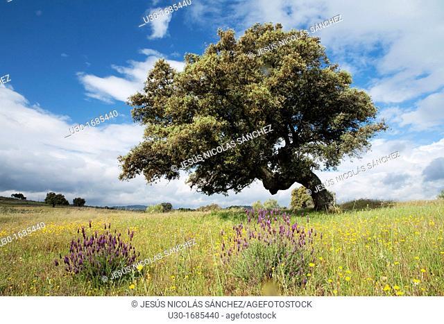 Landscape in Bohonal de Ibor  Cáceres province  Extremadura  Spain