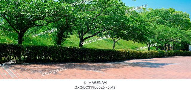 Path at Park
