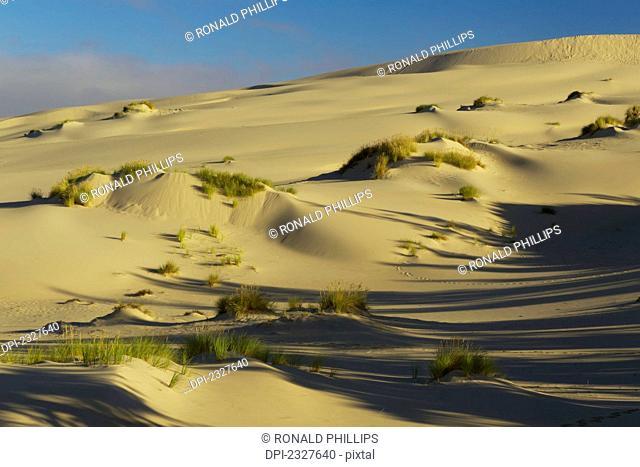 Umpqua dunes in the oregon dunes national recreation area;Oregon united states of america