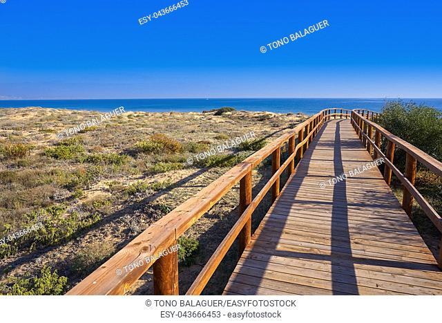 Arenals del Sol Beach dunes in Elche Elx of Alicante in Costa Blanca at Spain
