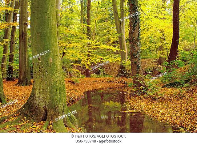 Temperate forest with autumn foliages and stream, Germany