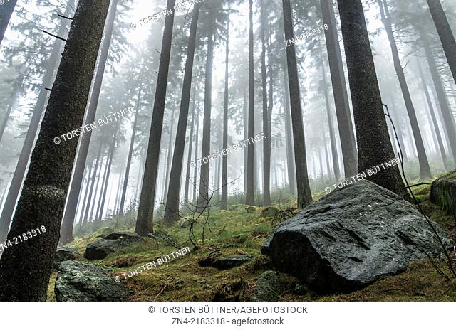 Coniferous Forest Surrounding in Sternwald Wind Farm. Upper Austria. Austria