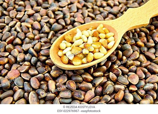 Cedar nuts in a spoon