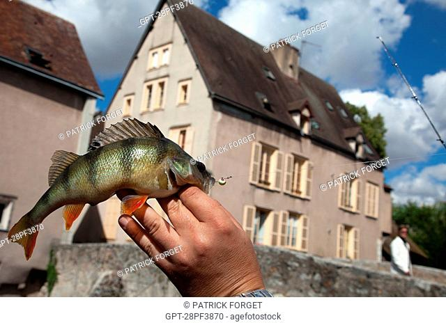 FISH CAUGHT BY A FISHERMAN IN THE EURE RIVER, STREET-FISHING, CHARTRES LOWER TOWN, EURE-ET-LOIR 28, FRANCE
