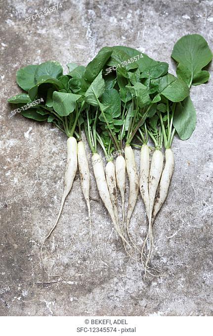 Icicle radishes with leaves on a grey background