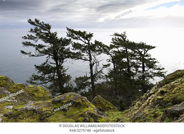 trees shaped by the wind at East Sooke Park, near Victoria, British Columbia, Canada