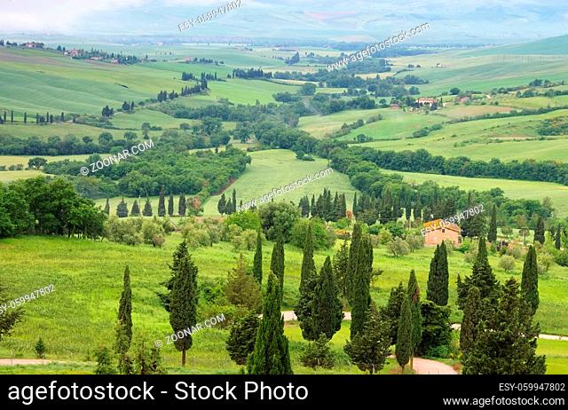 Toskana Zypressen mit Weg - Tuscany cypress trees with track 23